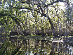 St. Johns River, near Blue Spring State Park