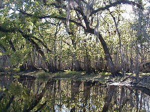 St. Johns River - St. Johns River near Blue Spring State Park showing more distinct banks and trees instead of marshes