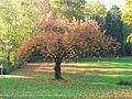 Stadtpark Wülfrath vom Süden aus-2 MJ.JPG