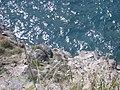 Starr-050404-0064-Chloris barbata-habitat-Hulu-Maui (24445984050).jpg