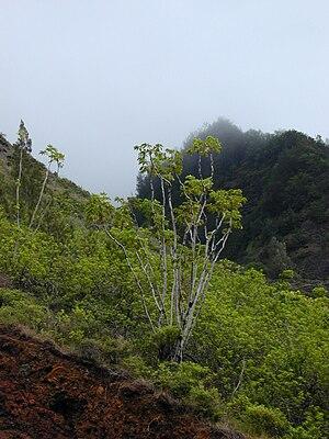 Piʻilaniwahine - Maui