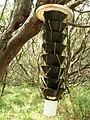 Starr 060627-8239 Cynodon dactylon.jpg