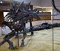 Stegosaurus price.jpg