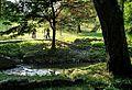 Stream - panoramio (12).jpg