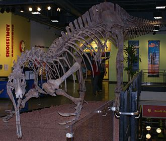 Chicago Children's Museum - Skeleton of a Suchomimus dinosaur as featured in the museum