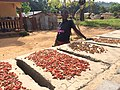 Sun drying pepper on the side of the street.jpg