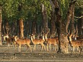 Sundarban's beauty 01.jpg