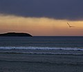 Sunset with seagull (3477581128).jpg