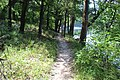Suwannee River State Park Suwannee River Trail 3.jpg