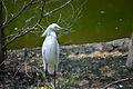 Sylvan Bird Park - North Carolina.jpg