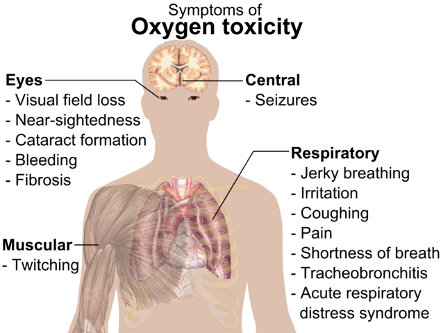 Adult Breathing Circuits