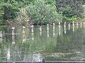 Tamigi River - panoramio.jpg