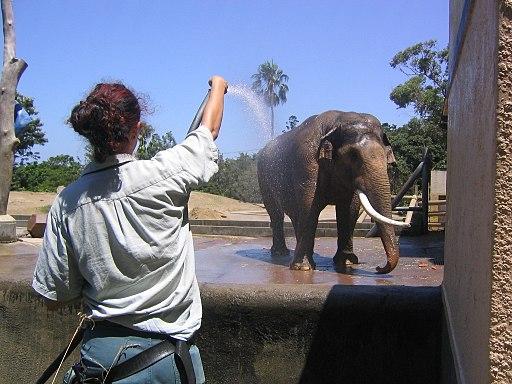Taronga Zoo (2050524328)