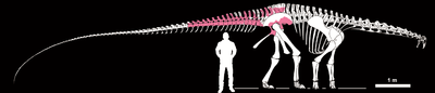 Tataouinea skeleton.png