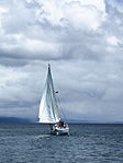 Taupo Sailor (6428599971).jpg
