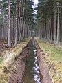 Tentsmuir Drainage Ditch - geograph.org.uk - 764227.jpg