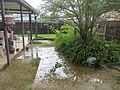 Terrytown Yard Rain Water July 2017.jpg