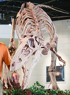 <i>Alioramus</i> Tyrannosaurid theropod dinosaur genus from the Late Cretaceous period