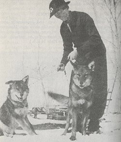 The Clever Coyote (1951) Coydogs.jpg