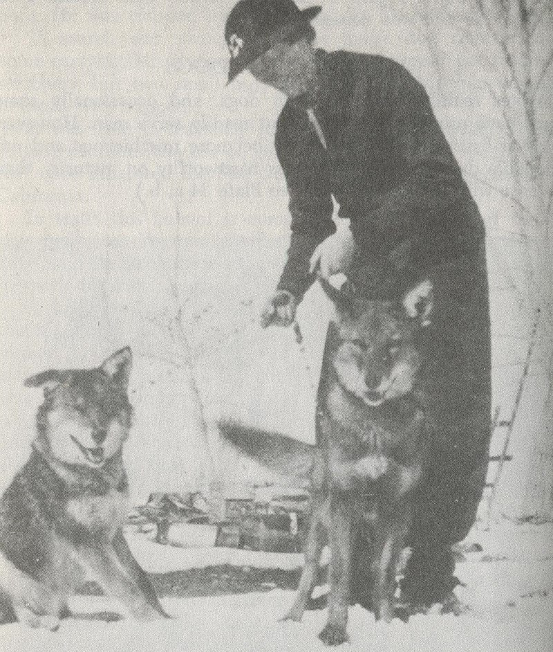 http://upload.wikimedia.org/wikipedia/commons/thumb/4/46/The_Clever_Coyote_%281951%29_Coydogs.jpg/800px-The_Clever_Coyote_%281951%29_Coydogs.jpg