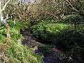 The Corfe River between Hurpston and Blackmanston - geograph.org.uk - 769222.jpg