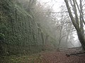 The Glen, Sligo in the fog in winter.jpg