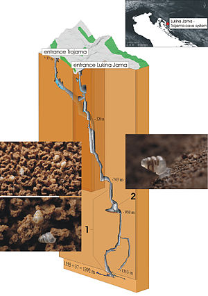 Image of Biospeleology: http://dbpedia.org/resource/Biospeleology