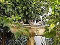 The Moorish Garden Fountain.jpg