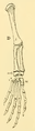 The Osteology of the Reptiles-192 iuyhgh jhg frt 2.png