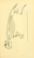 The Osteology of the Reptiles-259.png