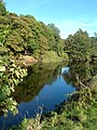 The River Ayr - geograph.org.uk - 579080.jpg