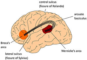 Broca's area - Image: The classical Wernicke Lichtheim Geschwind model of the neurobiology of language fpsyg 04 00416 g 001