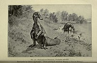 The life of a fossil hunter BHL19032180.jpg