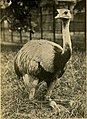 The world's birds a simple and popular classification of the birds of the world (1908) (14562055738).jpg