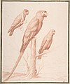 Three Parrots MET DP808078.jpg