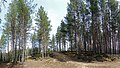 Tikkakoski - forest.jpg