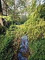 Toowong Creek in Oakman Park, Toowong, Brisbane 01.JPG