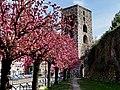 Torre San Vitale con fiori di pesco.jpg