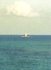 cetacea liguria - photo#36
