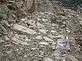 Tracciato Via degli Stranieri - Monte Pruno - zona archeologica - Roscigno (Sa) - Italia.JPG