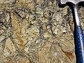 Trace fossils in fine-grained sandstone (Henley Member, Borden Formation, Lower Mississippian; Tener Mountain roadcut, southern Ohio, USA) 16 (35825562986).jpg