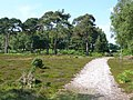 Track across Grip heath - geograph.org.uk - 836444.jpg