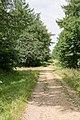 Track in Stoke Park Wood, Bishopstoke - geograph.org.uk - 895170.jpg