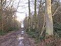 Track through Bubbenhall Wood - geograph.org.uk - 1709312.jpg