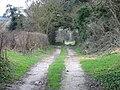 Track through the trees - geograph.org.uk - 347534.jpg