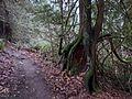 Trail behind Heritage Park - panoramio.jpg