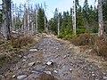 Trail near Rotenbeek 05.jpg