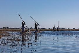 Travesía del delta del Okavango en makoro, Botsuana, 2018-07-31, DD 06.jpg