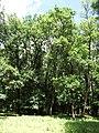 Trebisov Andrassyovsky kastiel (park)-13.JPG
