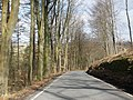 Tree-lined road through St Gwynno Forest - geograph.org.uk - 1204206.jpg